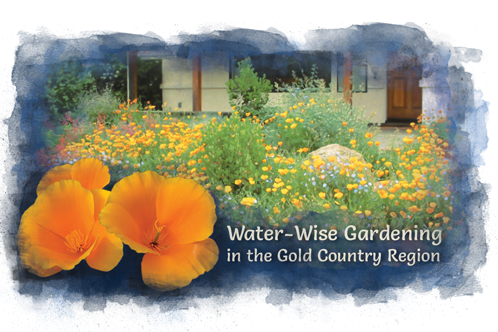 Water Wise Gardening In The Gold Country Region